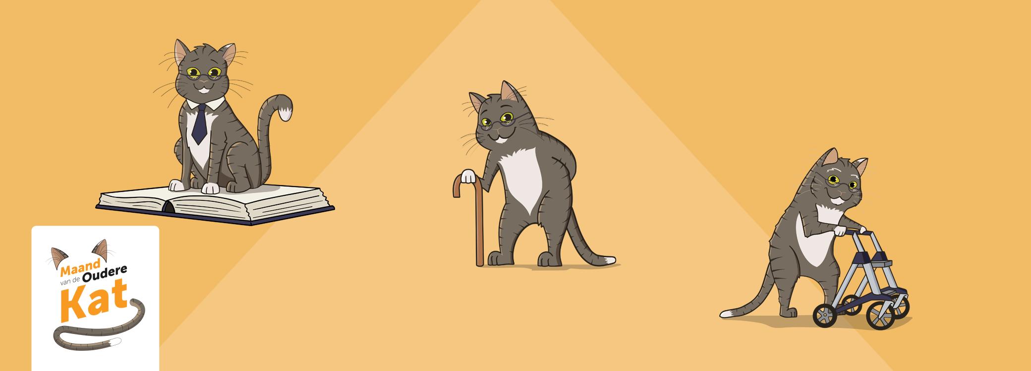 Waarop letten bij een oude kat?