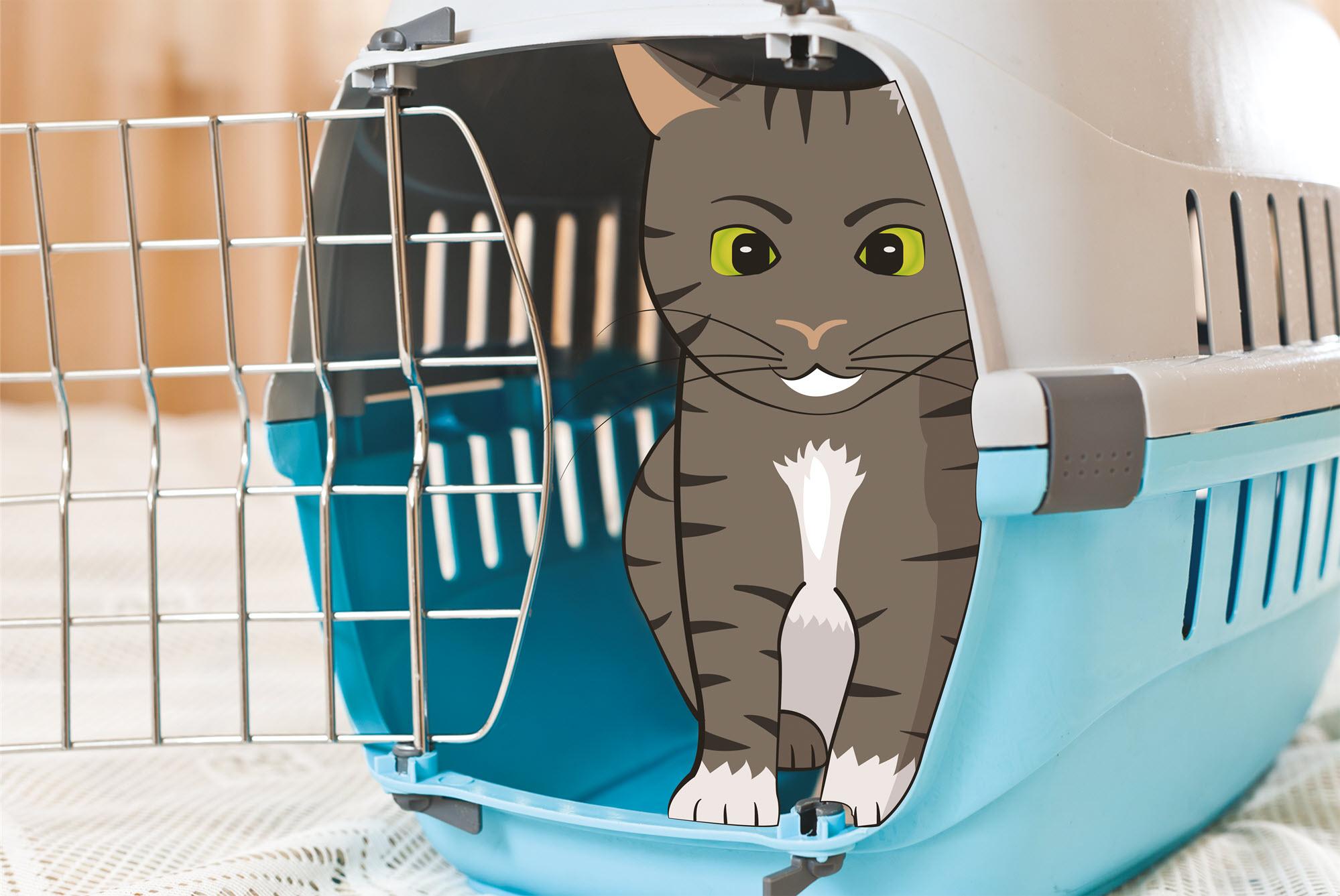 Kat vervoeren naar dierenartspraktijk