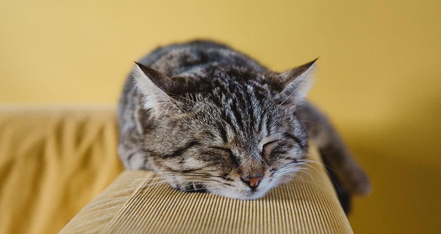 Hyper of hypo bij de kat