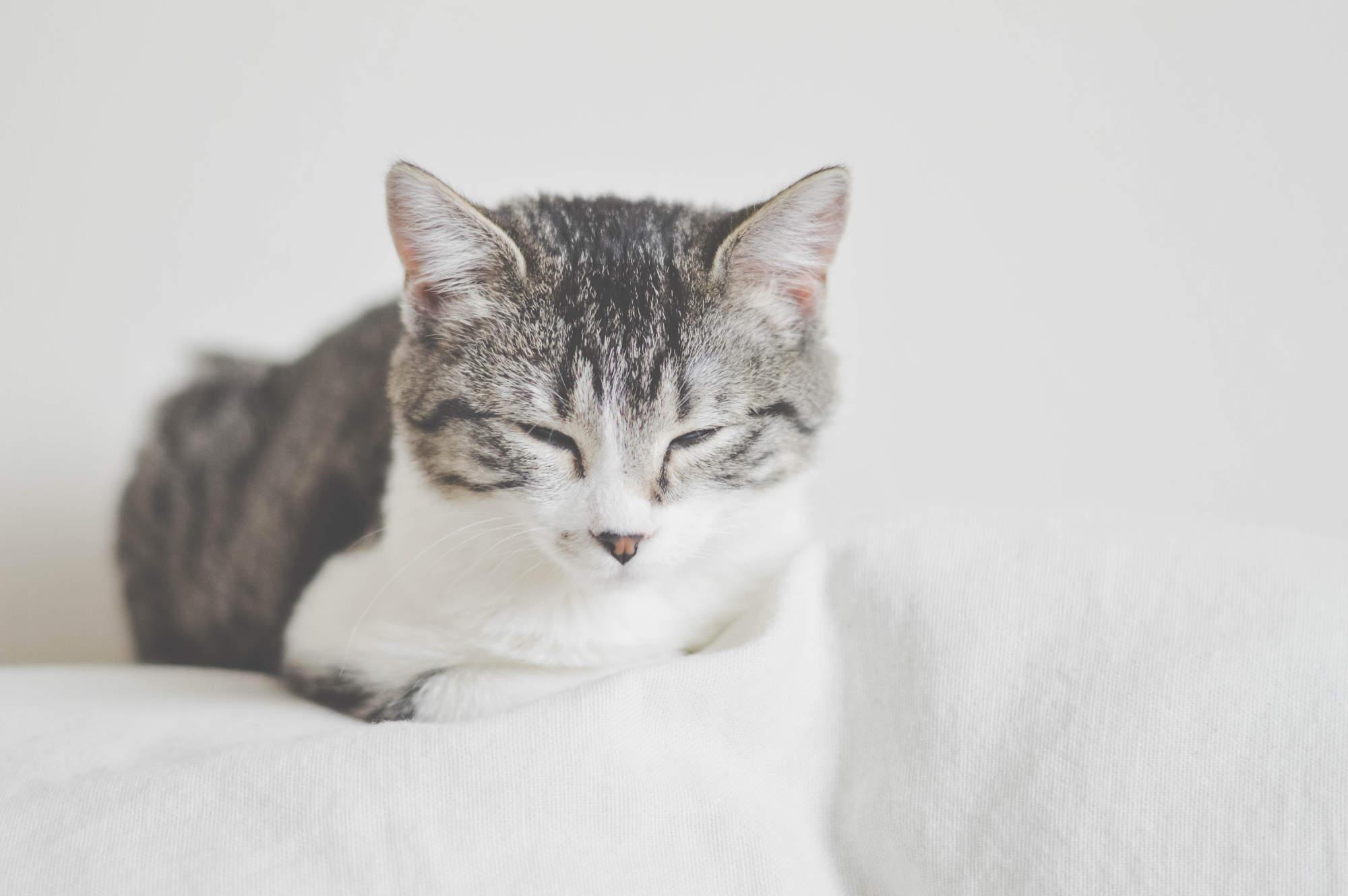 Pijn bij katten