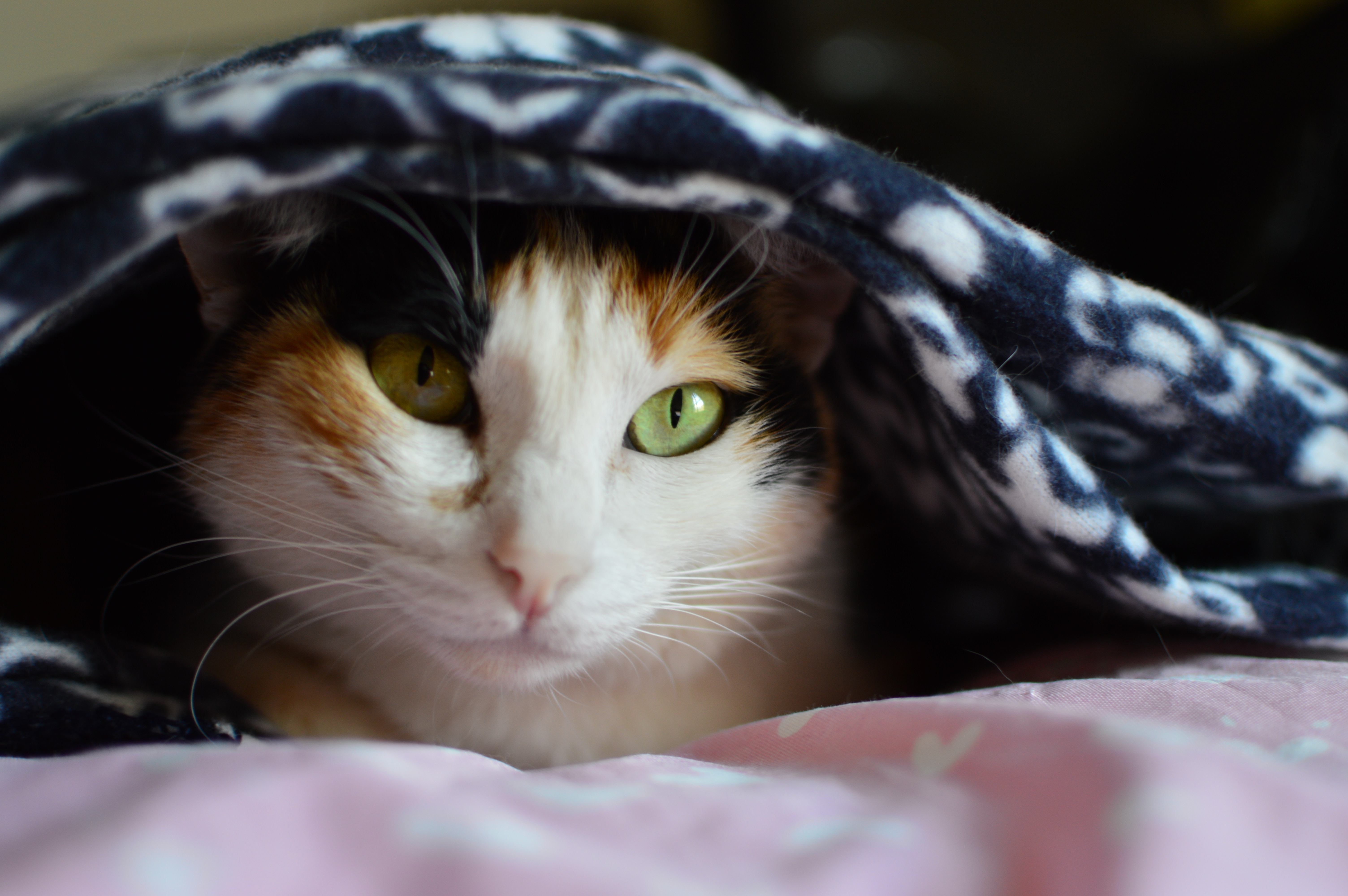 Wist je kat.. winter