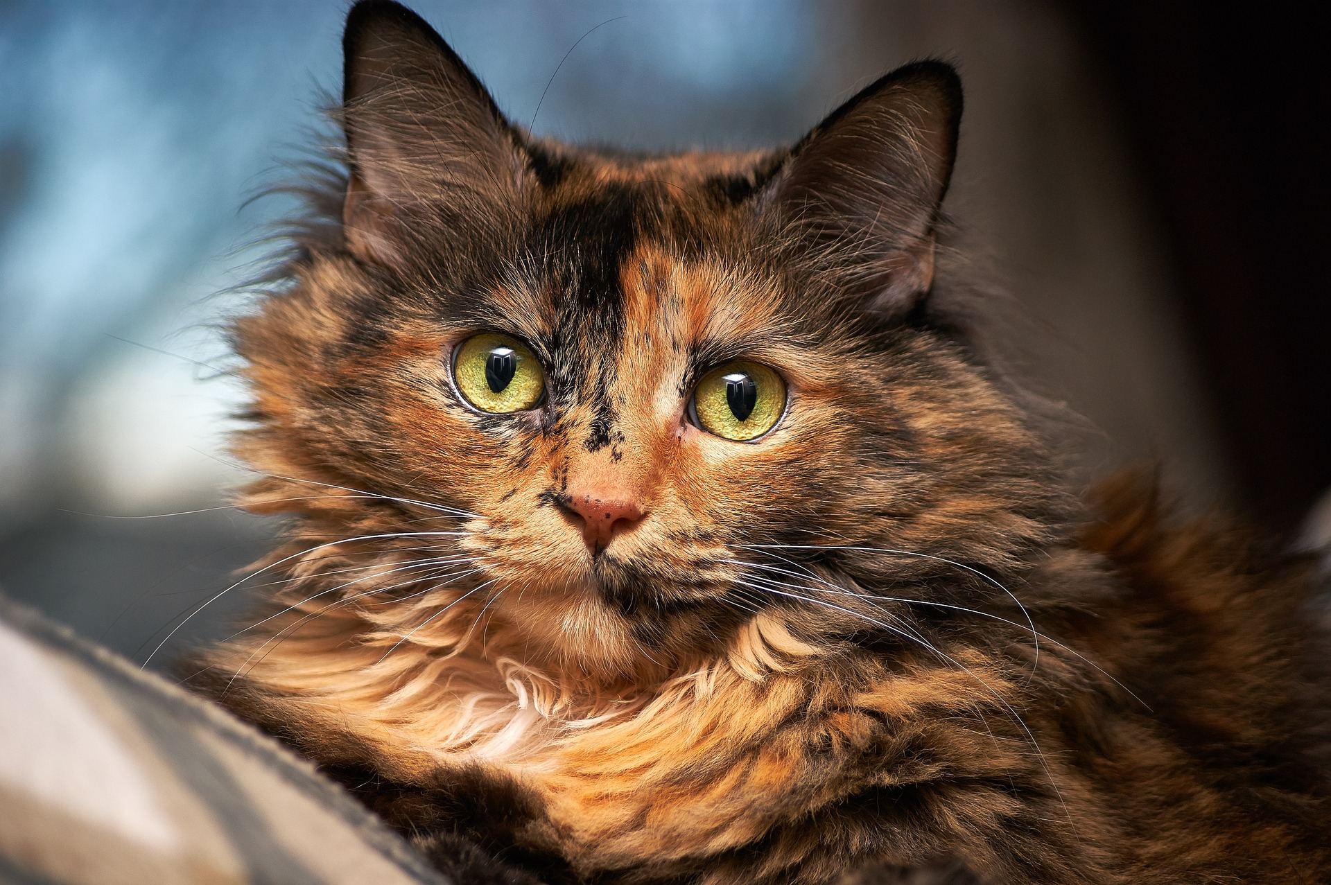 Wist je kat.. herfst