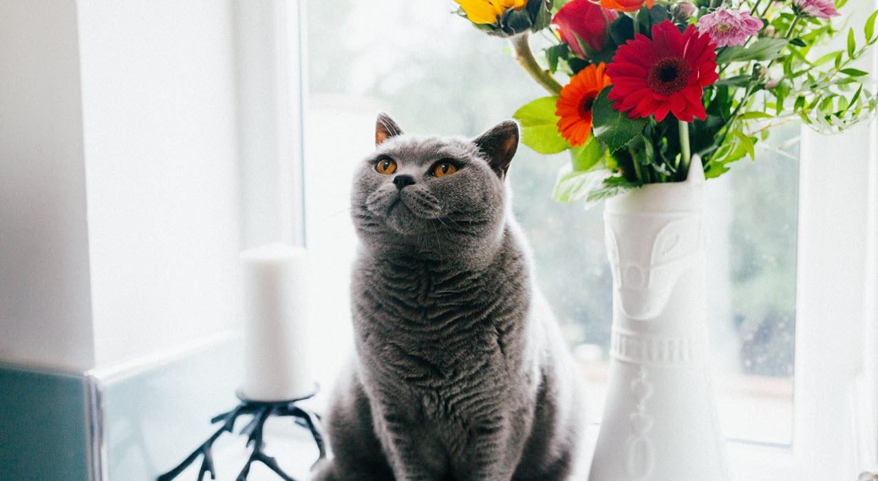Wist je kat.. lente
