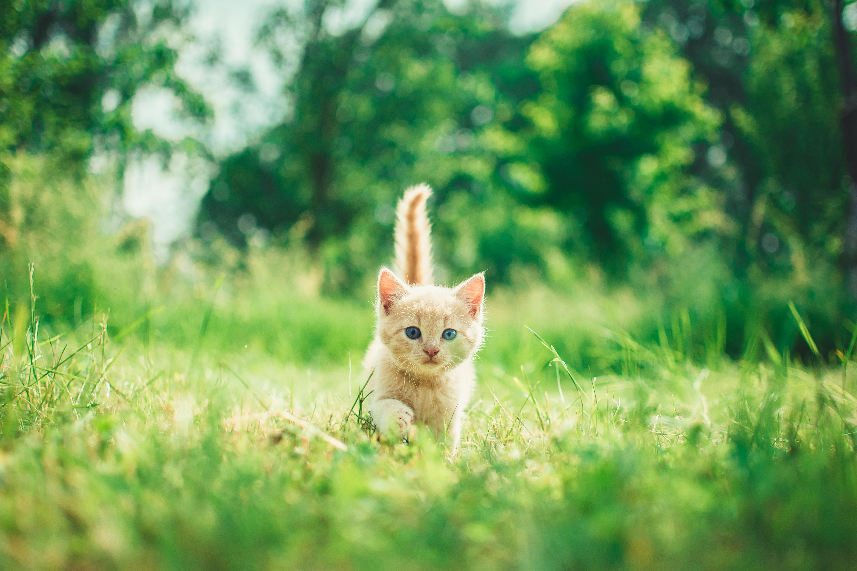 Wist je kat.. zomer