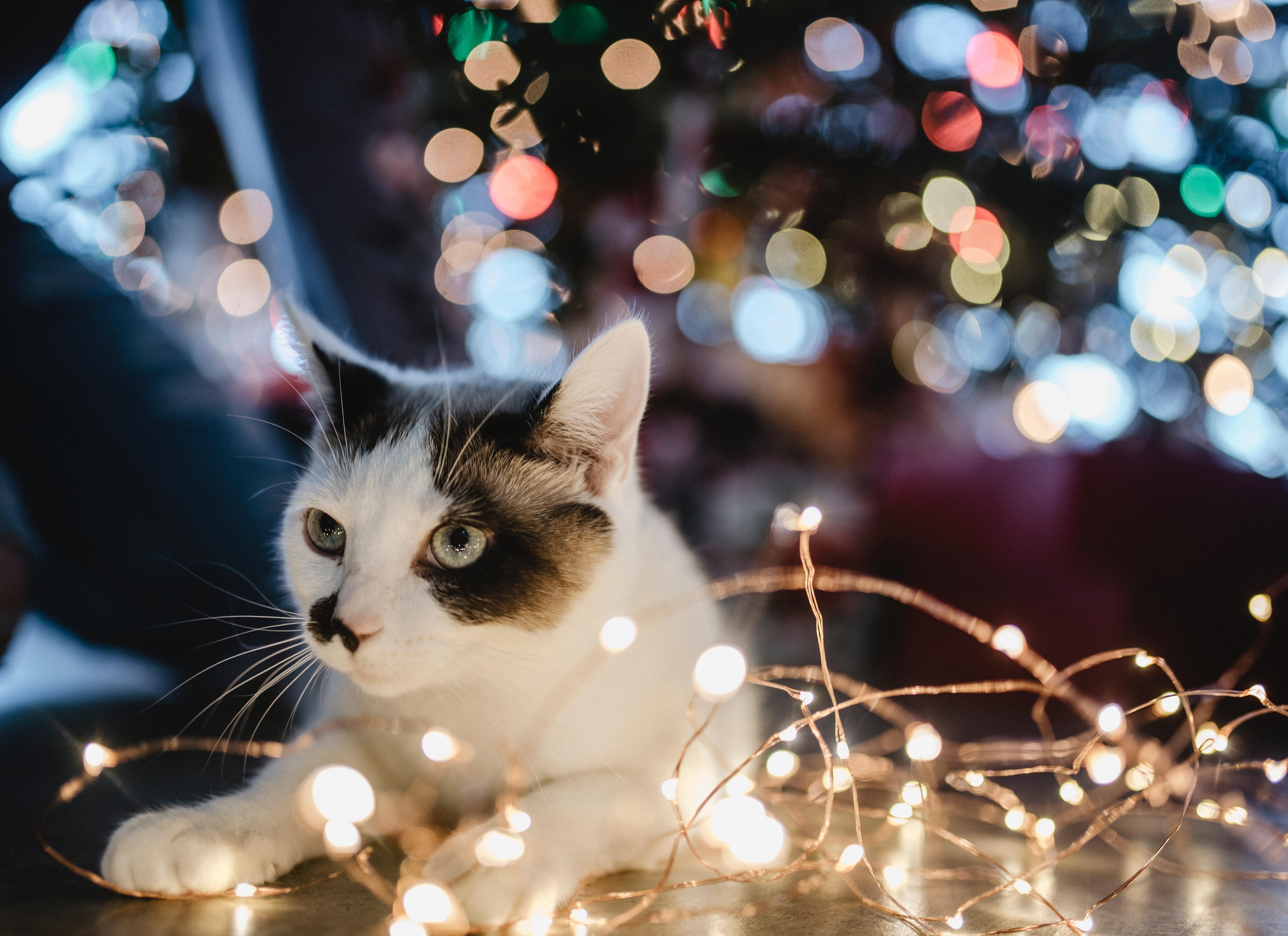 Vuurwerkstress bij katten